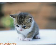 Guía de cuidados para gatitos huérfanos - Imagen 4
