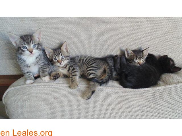 Guía de cuidados para gatitos huérfanos - 6