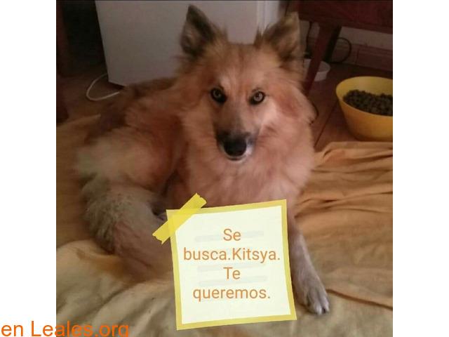 PERDIDA-SAN MATEO- SE LLAMA KITSYA - 6