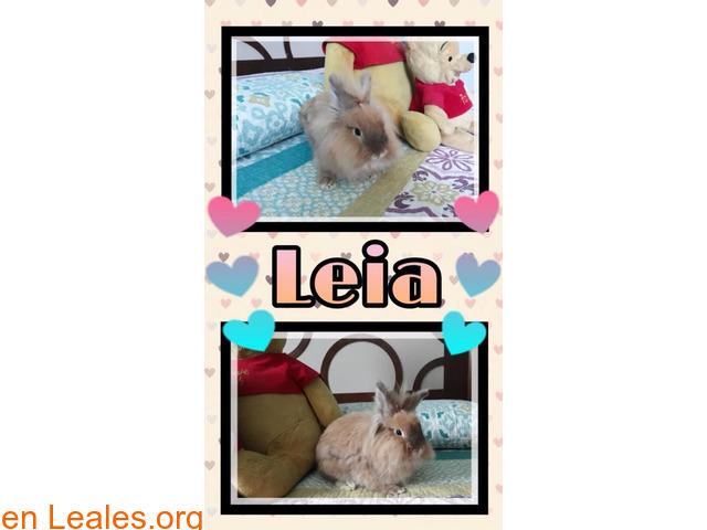 Leia busca un hogar - 1
