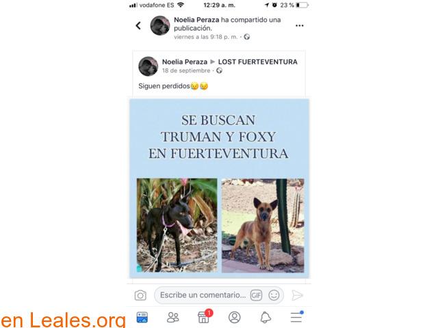 PERDIDOS EN FUERTEVENTURA- LA OLIVA. - 6