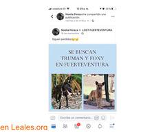 PERDIDOS EN FUERTEVENTURA- LA OLIVA. - Imagen 6