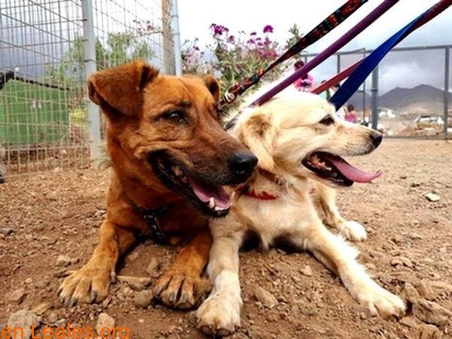 Charly y Churro en Adopción Juntos