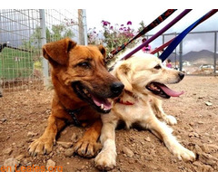 Charly y Churro en Adopción Juntos - Imagen 1