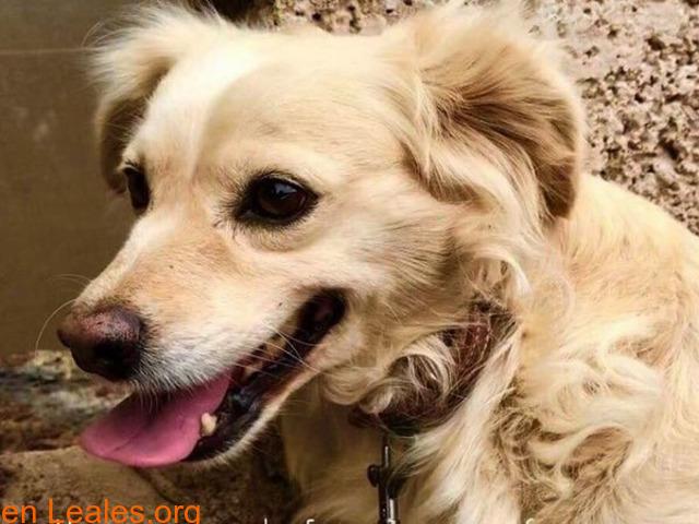 Charly y Churro en Adopción Juntos - 2