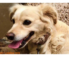 Charly y Churro en Adopción Juntos - Imagen 2