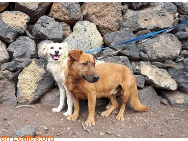 Charly y Churro en Adopción Juntos - 3
