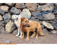 Charly y Churro en Adopción Juntos - Imagen 3