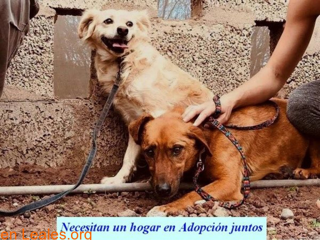 Charly y Churro en Adopción Juntos - 4