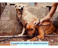 Charly y Churro en Adopción Juntos - Imagen 4