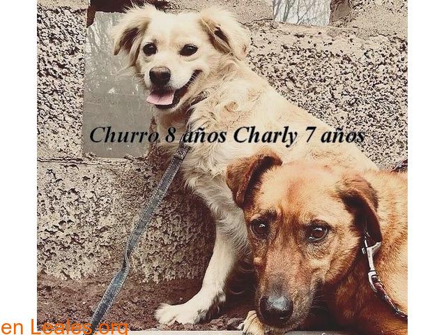 Charly y Churro en Adopción Juntos - 5