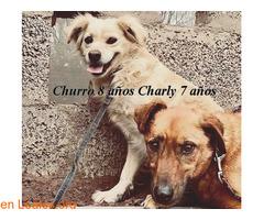 Charly y Churro en Adopción Juntos - Imagen 5