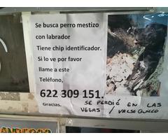 PERDIDO EN VALSEQUILLO. - Imagen 5