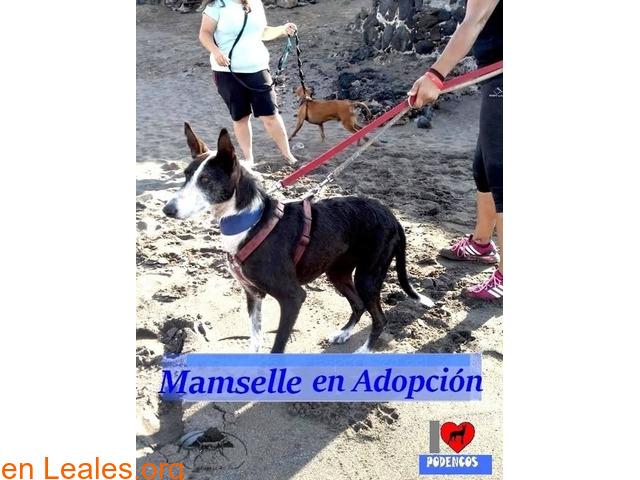 MAMSELLE en ADOPCIÓN TENERIFE - 4