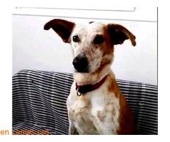 ELY,  Adopción Urgente Tenerife - Imagen 1