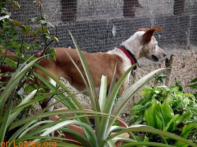 ELY,  Adopción Urgente Tenerife - 2