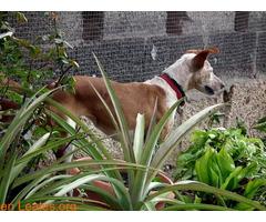 ELY,  Adopción Urgente Tenerife - Imagen 2