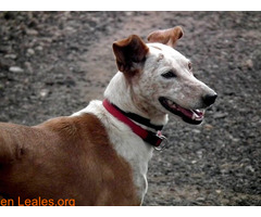 ELY,  Adopción Urgente Tenerife - Imagen 3