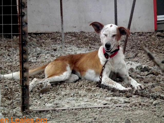 ELY,  Adopción Urgente Tenerife - 4