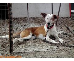ELY,  Adopción Urgente Tenerife - Imagen 4