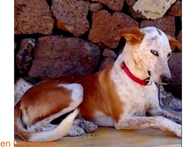 ELY,  Adopción Urgente Tenerife - 6