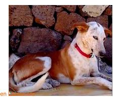 ELY,  Adopción Urgente Tenerife - Imagen 6