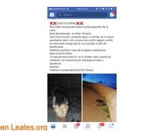 NECESITA ACOGIDA URGENTE,ESTA ENLA CALLE - Imagen 7