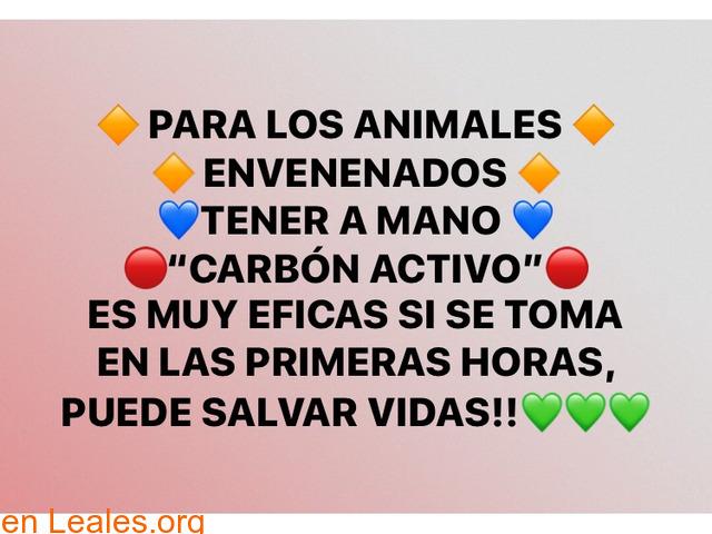 ••CARBÓN ACTIVO PARA LOS ENVENENAMIENTOS - 1