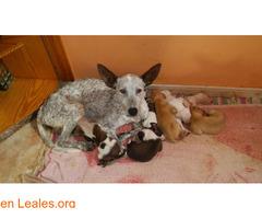 Cachorro 2 ya adoptado - Imagen 2