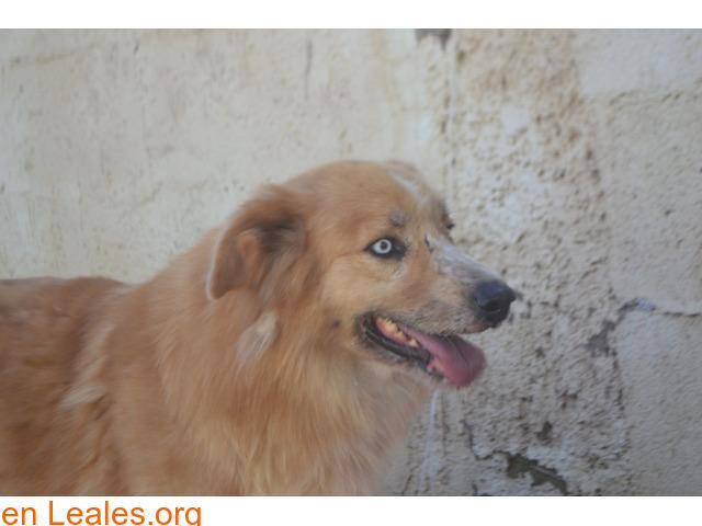 Marco en adopcion en TIERRA BLANCA