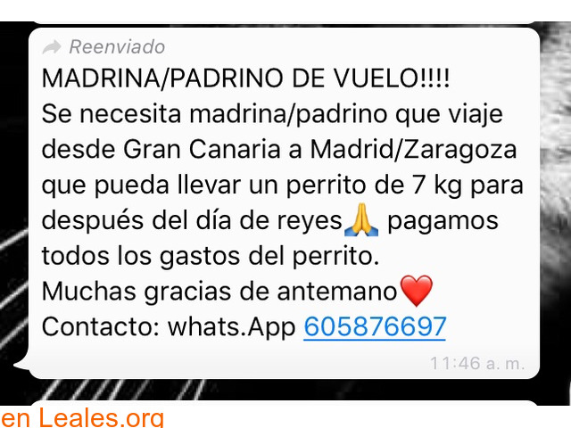 NECESITA PADRINO VUELO:GC-MADRID/ZARAGOZ - 1