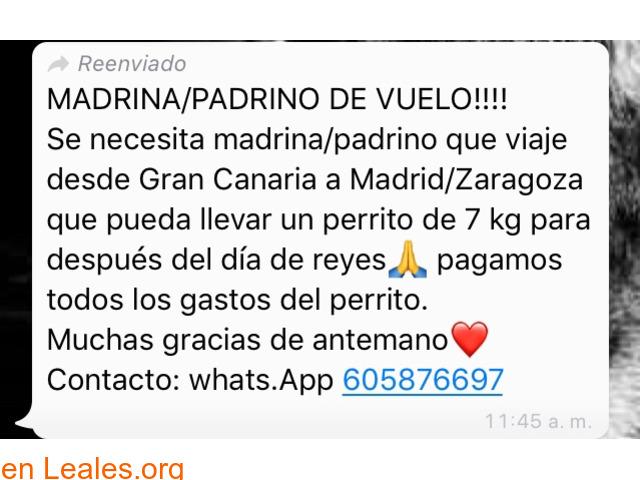 NECESITA PADRINO VUELO:GC-MADRID/ZARAGOZ - 2