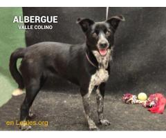 AMELIA ADOPTADA ALBERGUE VALLE COLINO - Imagen 3