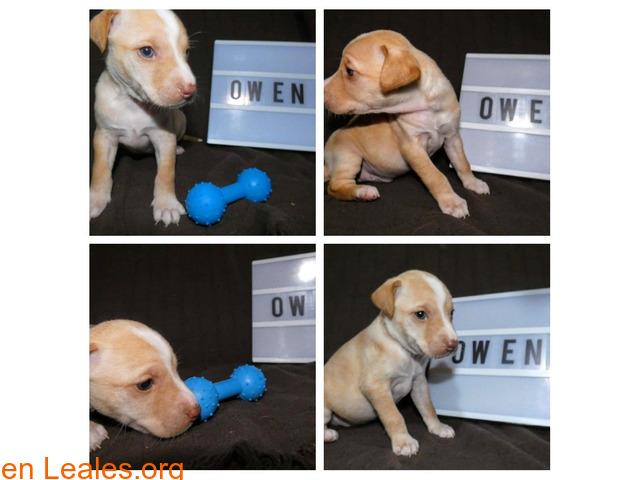 Owen - 1