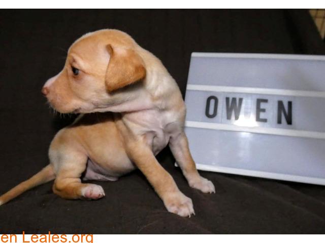 Owen - 2