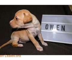Owen - Imagen 2