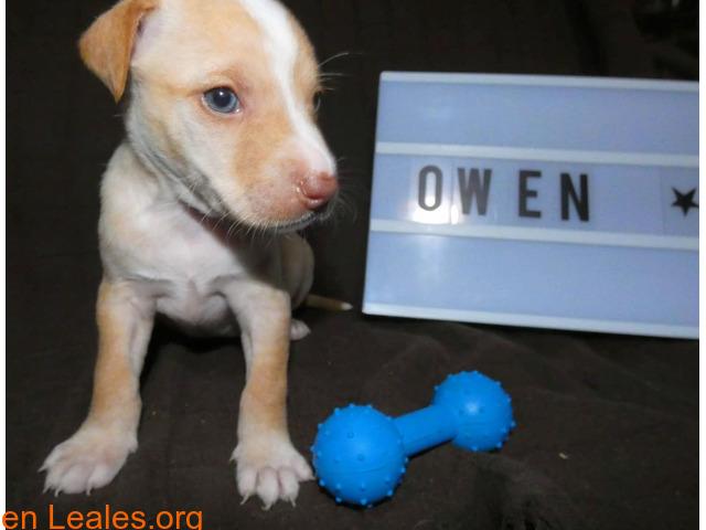 Owen - 3