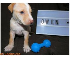 Owen - Imagen 3