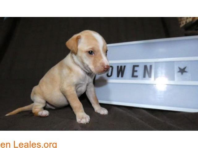 Owen - 4