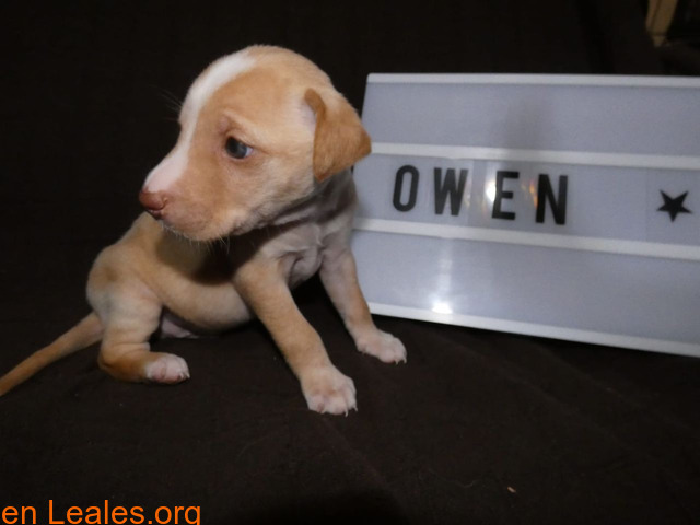 Owen - 5