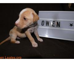 Owen - Imagen 5