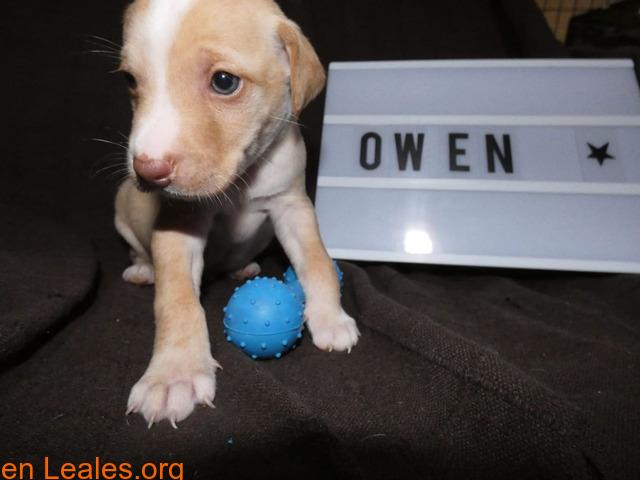 Owen - 6