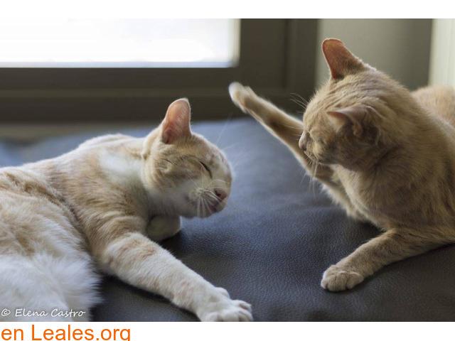 Protocolo de presentación de gatos - 1