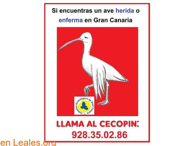 UN AVE HERIDA O ENFERMA LLAMA •CECOPIN - 1
