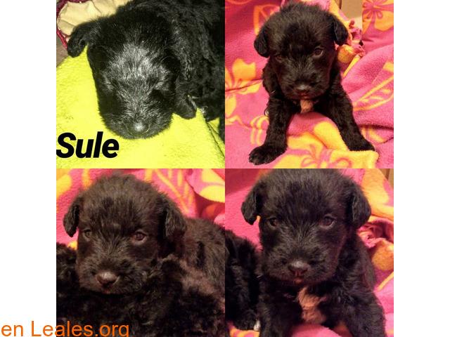 Sule - 1