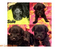 Sule - Imagen 1