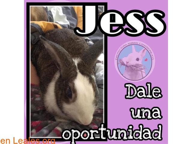 Jess en adopción - 1