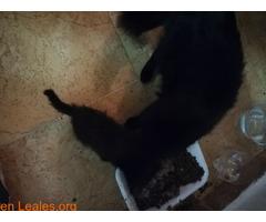 Sacrificios de animales sanos en GC - Imagen 1
