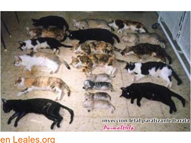 Sacrificios de animales sanos en GC - 2