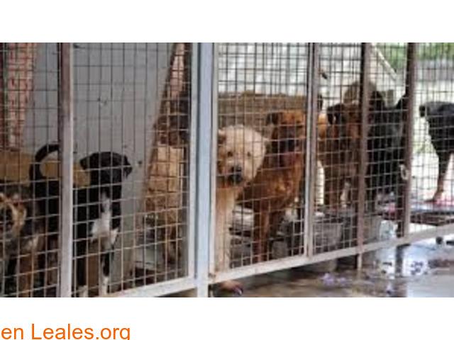 Sacrificios de animales sanos en GC - 3